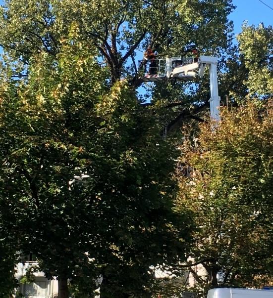 Baumbesetzung geräumt